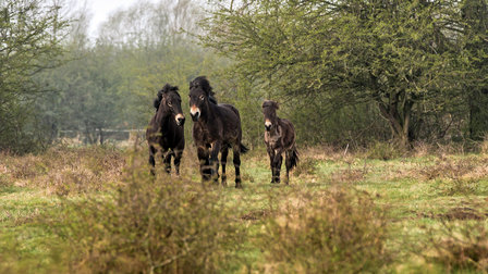 Wild horses at the Posche Leipzig Offroad-Area